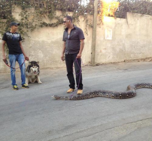 wwyd  warning  snake picture