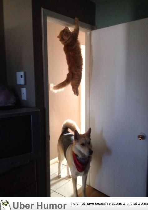 You guys see the cat run past here? | uberHumor.com