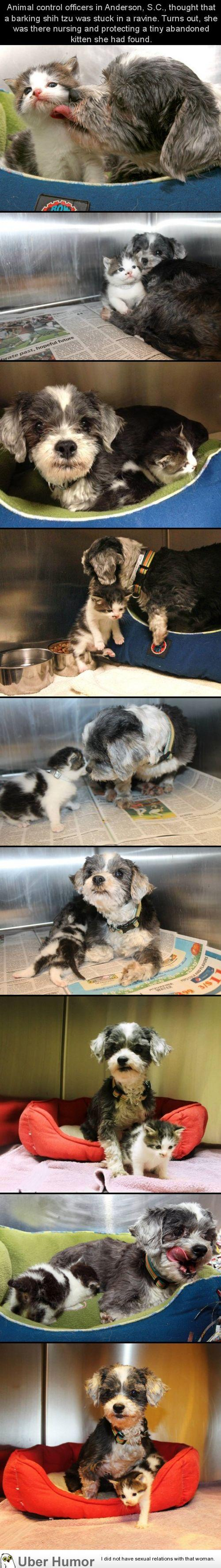 Dog finds a tiny kitten, risks everything to save her. | uberHumor.com