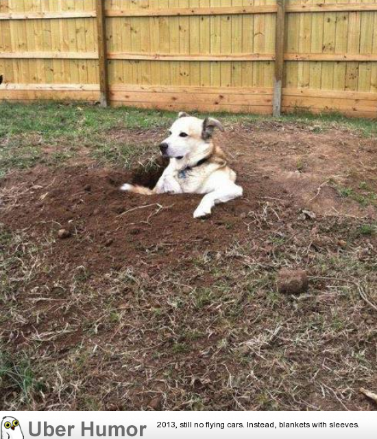 This dog likes to dig holes and then just sits and chills in them watching people… | uberHumor.com