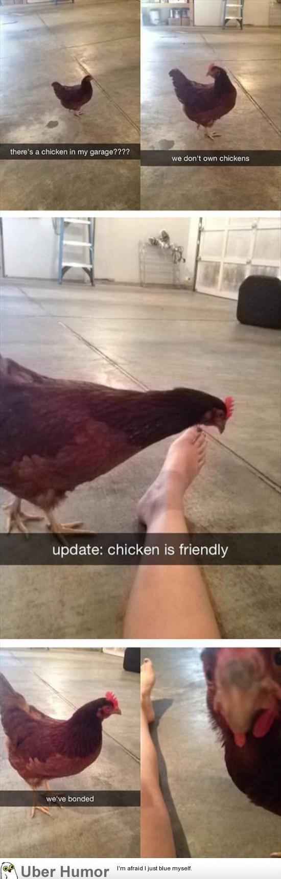 Hey you chicken me out? | uberHumor.com