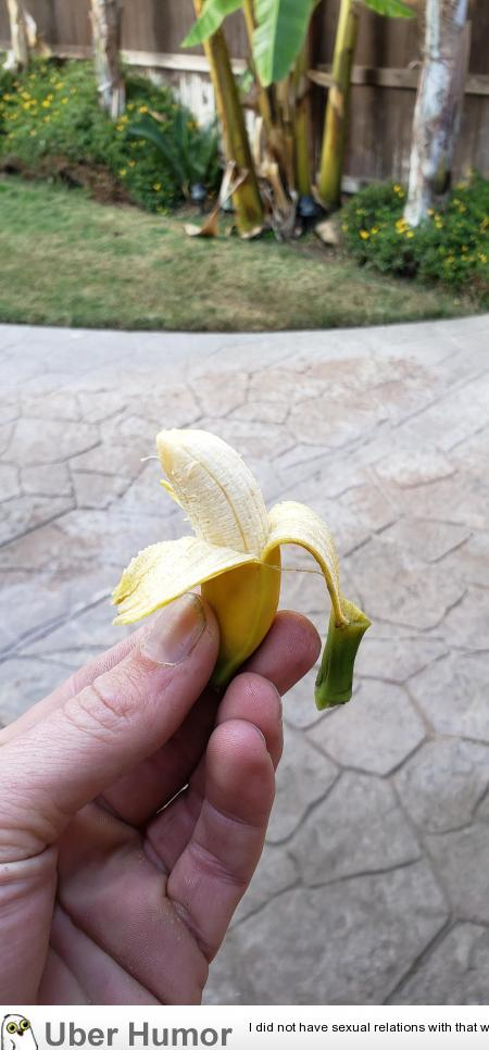 Harvested some bananas that grew in my backyard. I guess, success? | uberHumor.com