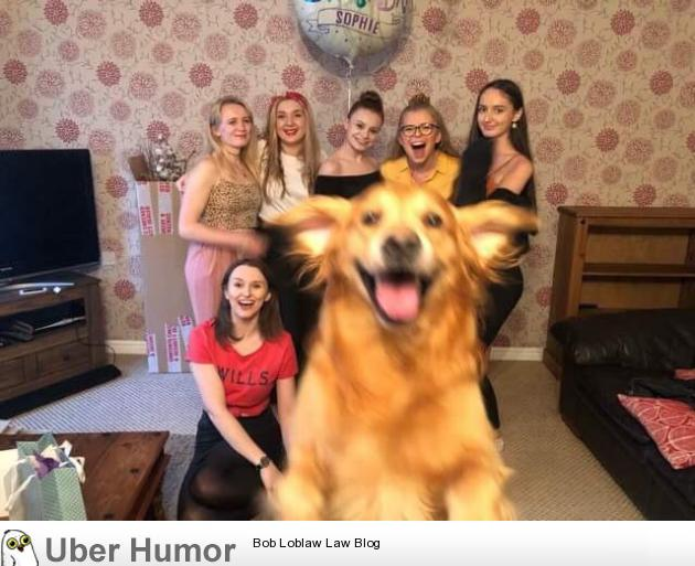 My girlfriend and her friends tried to take a group photo, Alfie wanted to be in it as well | uberHumor.com