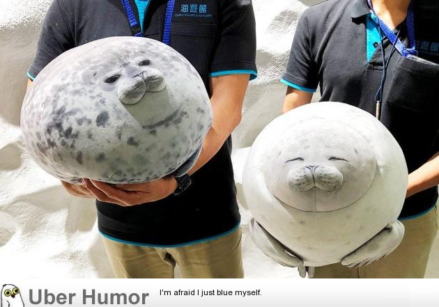 Osaka Aquarium just stepped up their gift shop game with these fat seal plushies | uberHumor.com