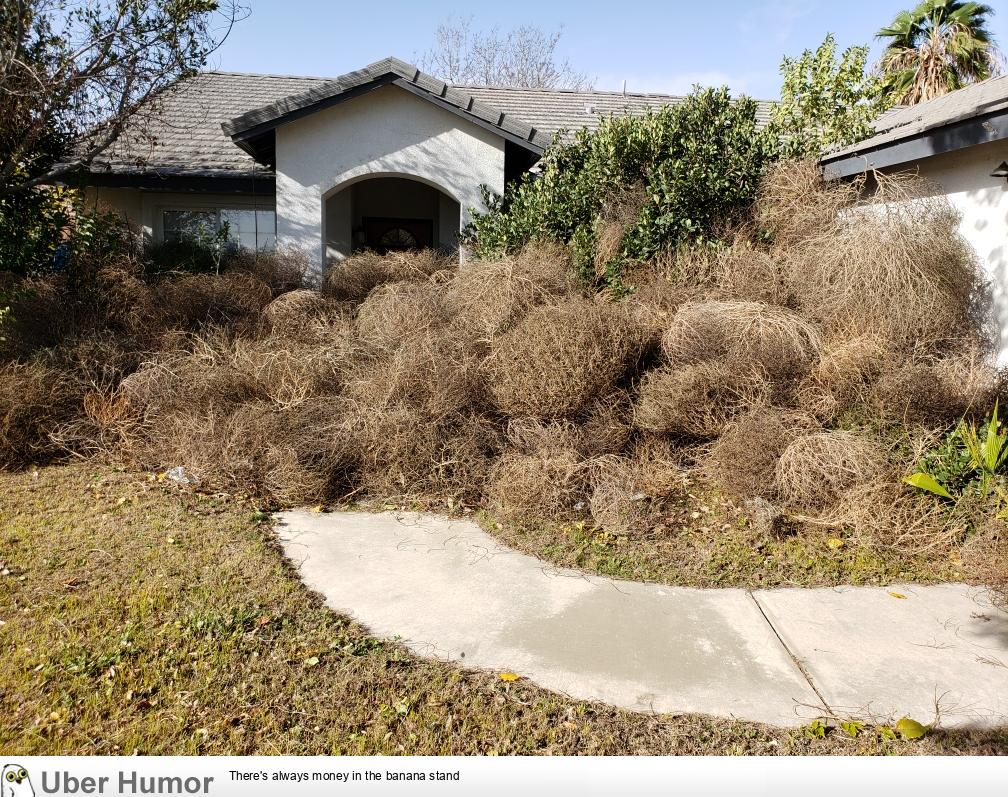 These Tumbleweeds That Piled Up In Front Of My Brothers